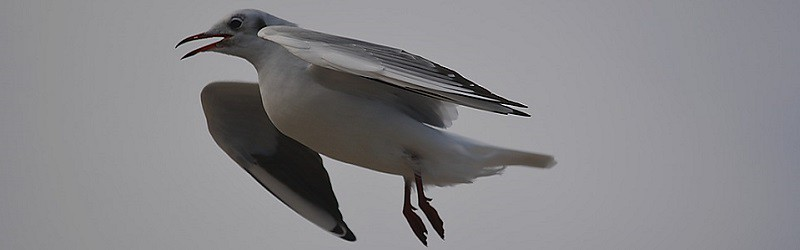 Manche Vögel schlafen im Flug