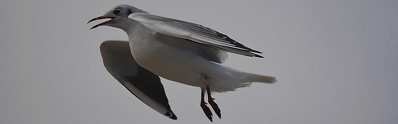 bird-1092896_960_720